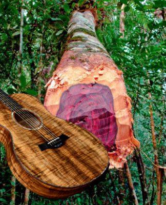 Gỗ Mahogany là gỗ gì